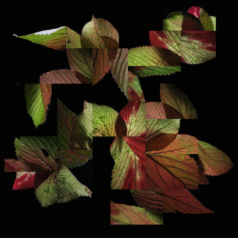 leaf image / david garland